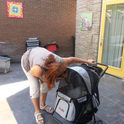 Zoe ons oude hondje mag mee in haar eigen karretje